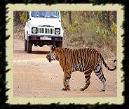Kanha National Park, India Wildlife Tour Packages