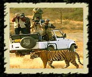 Ranthambhore National Park, India Wildlife Tour